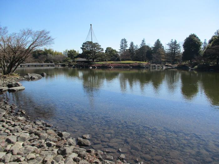 日本庭園池1.jpg