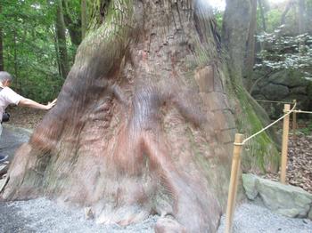 内宮巨木2.jpg