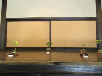 盆栽園5.jpg