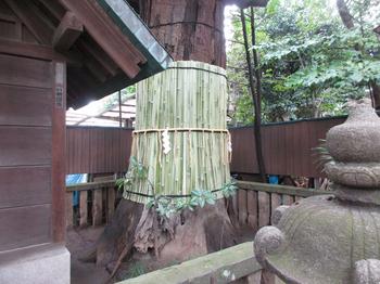 七社神社御神木 のコピー.jpg