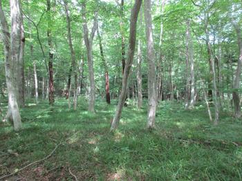 木の俣渓谷6.jpg
