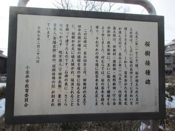 玉川上水桜樹接種の碑2.jpg